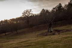 deers Стоковое фото RF