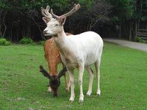 Deers Image stock
