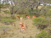 deers foto de stock royalty free