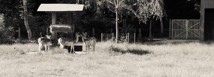 deers Arkivbilder