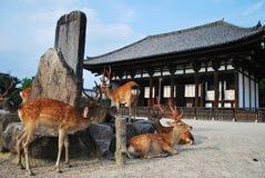 Deers bij tempel stock fotografie