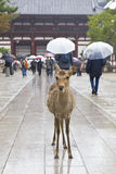 Deers in crowded Nara park Stock Photos