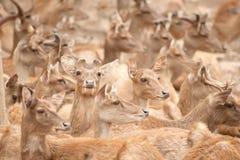 Deers in de dierentuin stock foto's