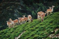 Deers dichtbij het bos stock afbeelding