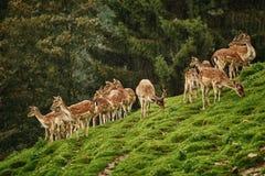 Deers dichtbij het bos royalty-vrije stock fotografie
