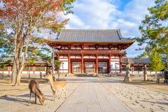 Deers en middenpoort van todaiji in Nara, Japan royalty-vrije stock afbeeldingen