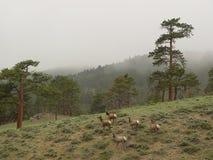 Deers en montañas Imagen de archivo libre de regalías