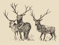 Deers Engraving, Vintage Illustration, Sketch Stock Photo