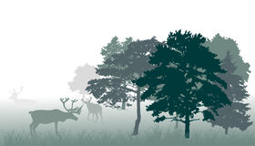 Deers in forest green illustration Stock Photos