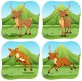Deers in four different scenes Stock Photo