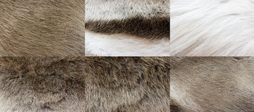 Deer�s fur texture Royalty Free Stock Photography