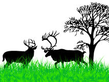 Deers on the grass Stock Photos
