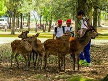Deers in het park van Nara Royalty-vrije Stock Foto's