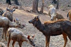 Deers i en skog Royaltyfri Foto