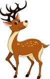 Deers isolerade på vit bakgrund Arkivfoto