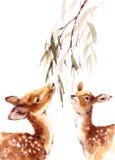 Deers Looking Up Eating Leaves Watercolor Animal Illustration Hand Painted Royalty Free Stock Image