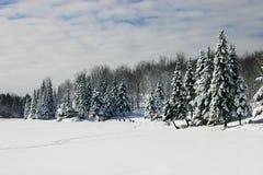 Deers marchant à travers un lac figé Image libre de droits