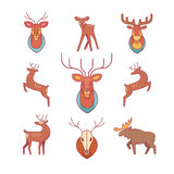 Deers, moose, antlers and horns, stuffed deer head Stock Photos