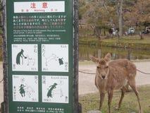 Deers in Nara Park, Japan royalty free stock images