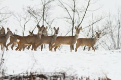 Deers near the forest Stock Image
