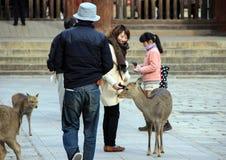 Deers och folk i Naraen Royaltyfria Bilder