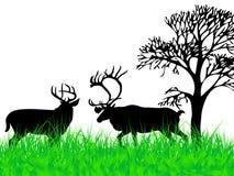 Deers op het gras stock illustratie