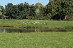 Deers op het groene gras royalty-vrije stock foto