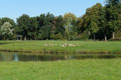 Deers op het groene gras stock foto