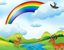 Deers and rainbow Royalty Free Stock Photo