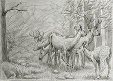 Deers rodzinni Obraz Royalty Free