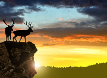 Deers silhouettes Royalty Free Stock Image