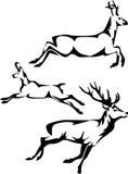 Deers Royalty Free Stock Image