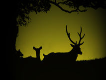 Deers sur l'herbe illustration stock
