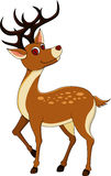 Deers trennte auf weißem Hintergrund Stockfoto