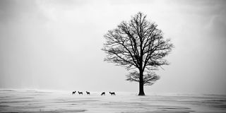 Deers van kuiten in de winter Stock Fotografie