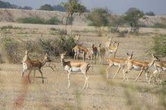 Deers w grupie w lesie zdjęcia stock