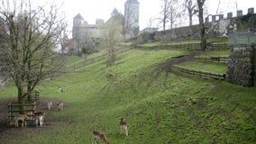 Deers w kasztelu Fotografia Stock
