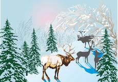 Deers in winter forest Royalty Free Stock Image