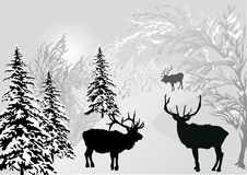 Deers in winter forest landscape Royalty Free Stock Image