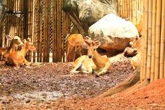 Deers in the zoo Royalty Free Stock Image