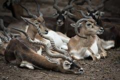 Deers in zoo Stock Photo