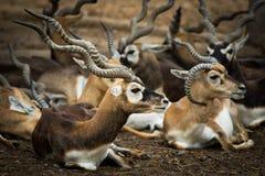 Deers in zoo Royalty Free Stock Image