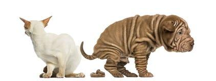 Defecación del perro y gato asqueado Imagen de archivo libre de regalías