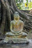 Defekt forntida liten staty för grå färger av Buddha royaltyfri fotografi