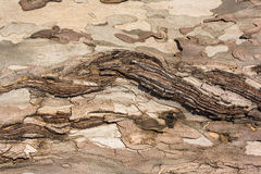 Defekt textur för trädskäll Arkivfoton