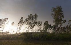 Defekte Bäume nach einem Sturm Lizenzfreie Stockfotografie
