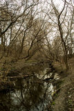 Defekte Bäume und kleiner Fluss stockbilder