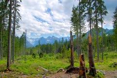 Defekte Baumstämme auf dem Hintergrund von Bergen Lizenzfreie Stockbilder