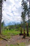 Defekte Baumstämme auf dem Hintergrund von Bergen Lizenzfreies Stockfoto