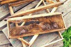 Defekte hölzerne Bienenrahmen Stockbilder